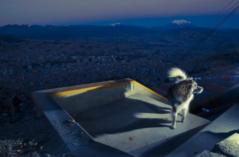 bolivian street dogs