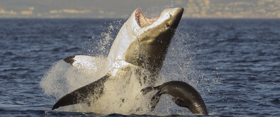 SHARK BREACH