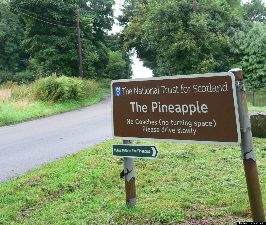 pineapple scotland