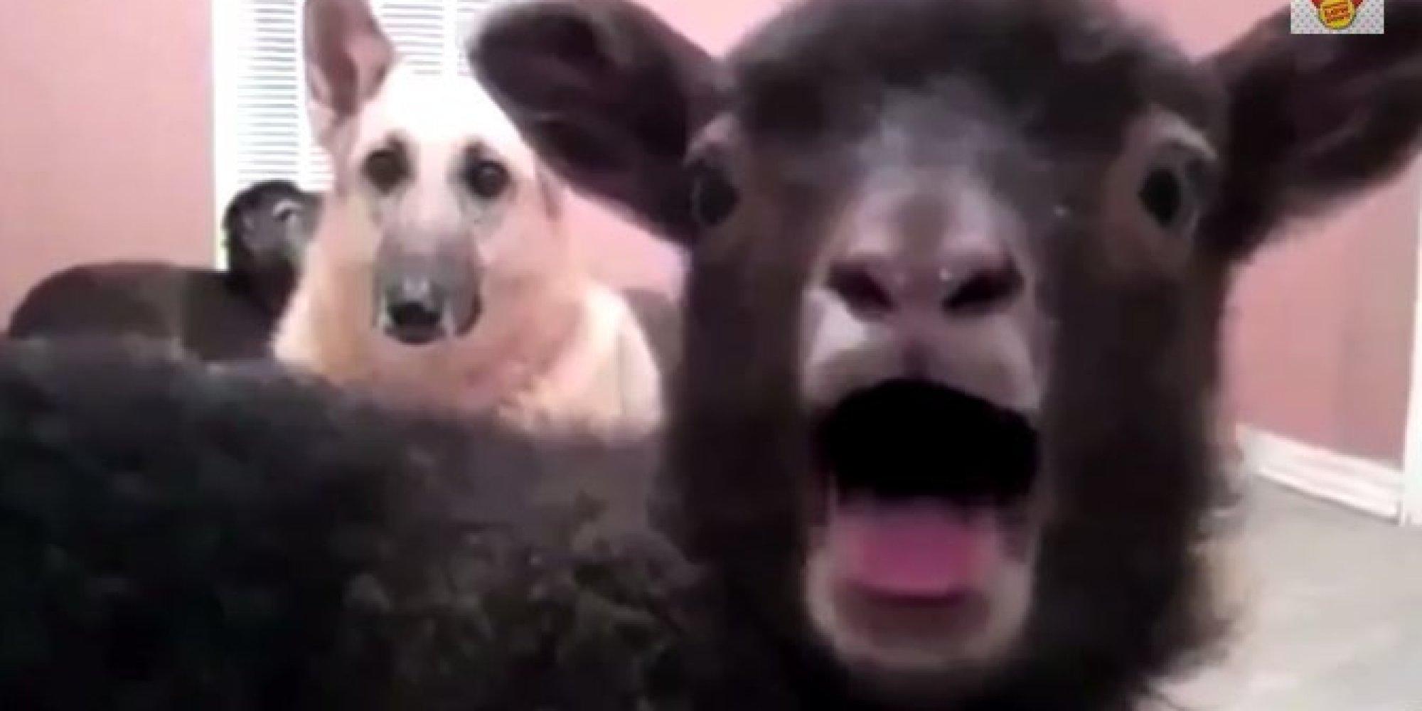 Трахни овечку игра онлайн бесплатно 13 фотография