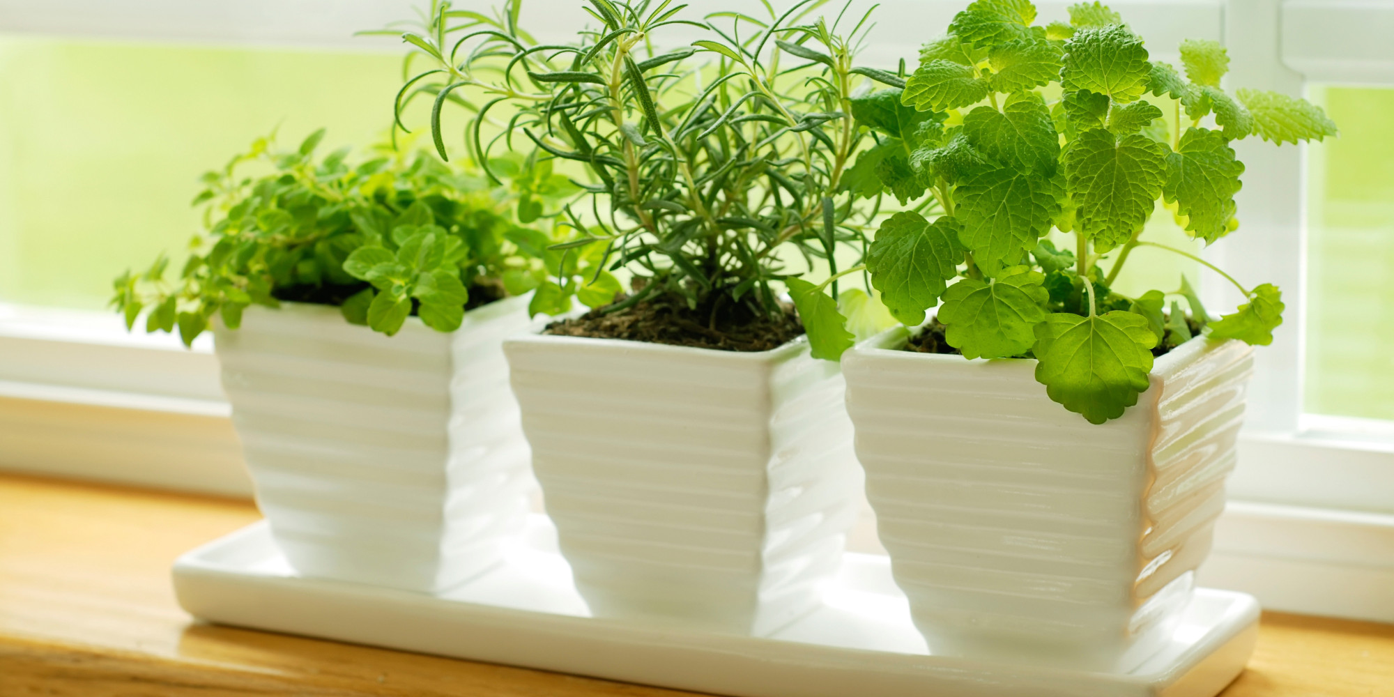 10 ways raising house plants and kids are similar | huffpost