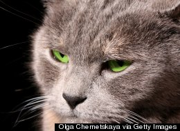 Woman Calls 911 After Angry Cat Traps Her In Bedroom (AUDIO)