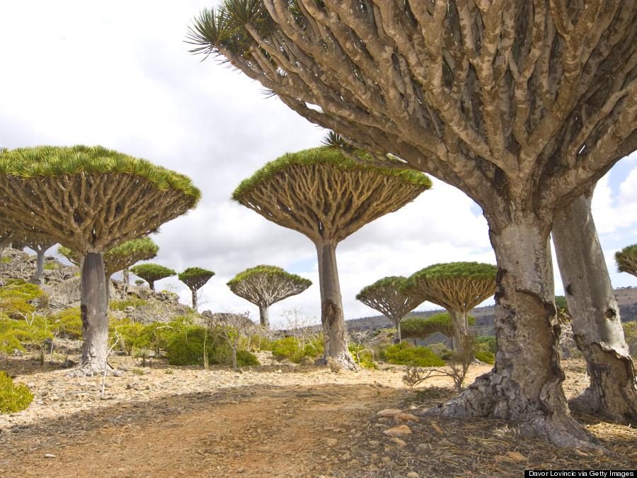 socotra island yemen