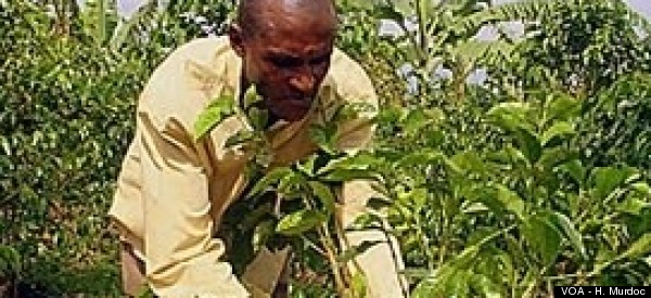 Now Small Farmers In East Africa Can Sell On The World Market