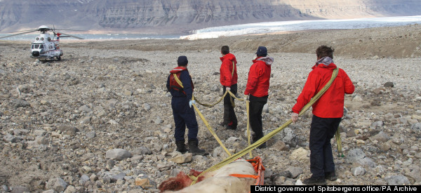 Polar Bear Which Mauled Schoolboy To Death Was 'Probably Stressed' Due To Toothache