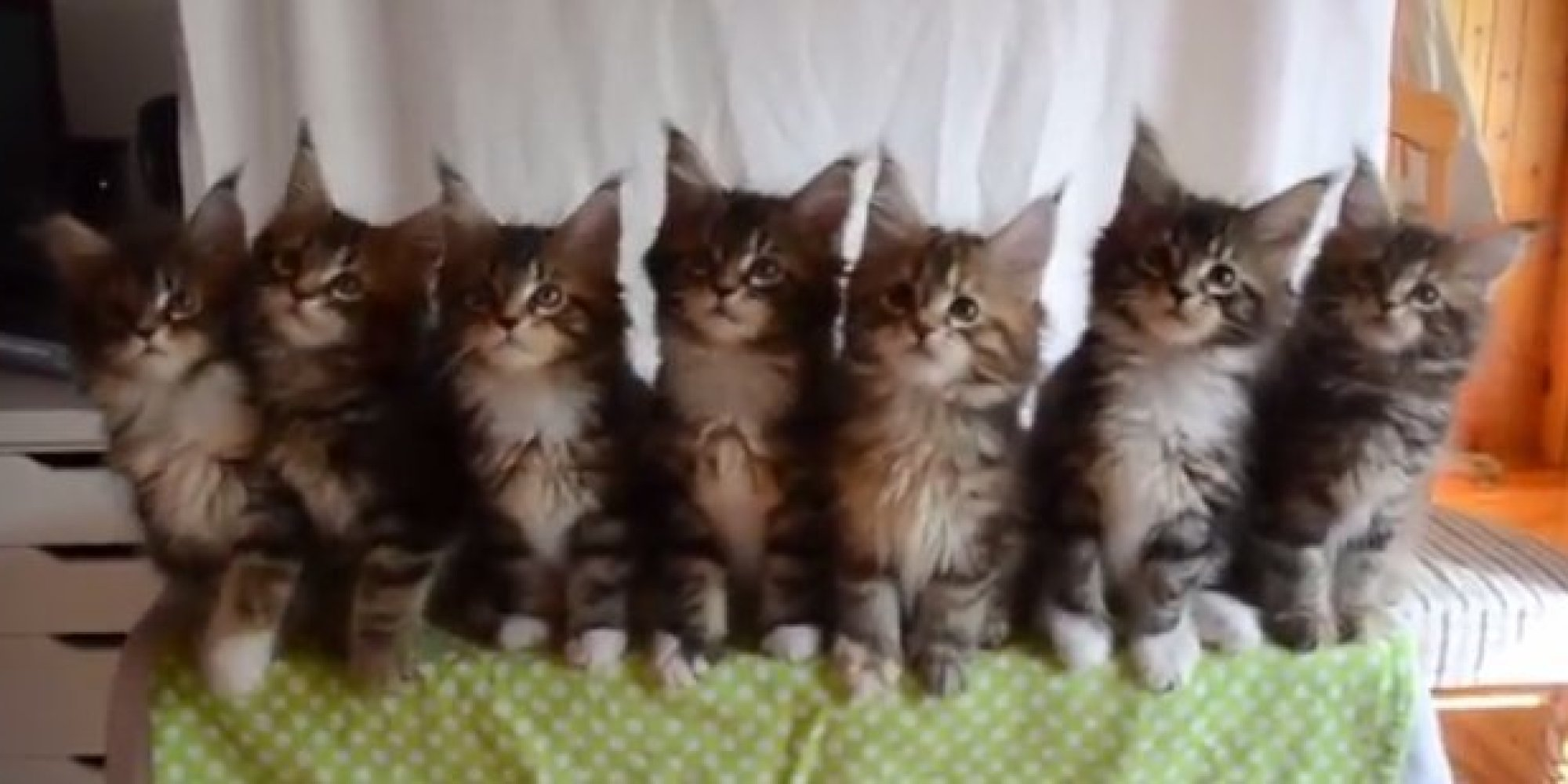 Cute Cat Video Post Election
