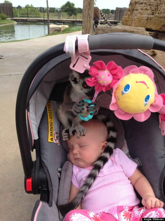 lemur on baby