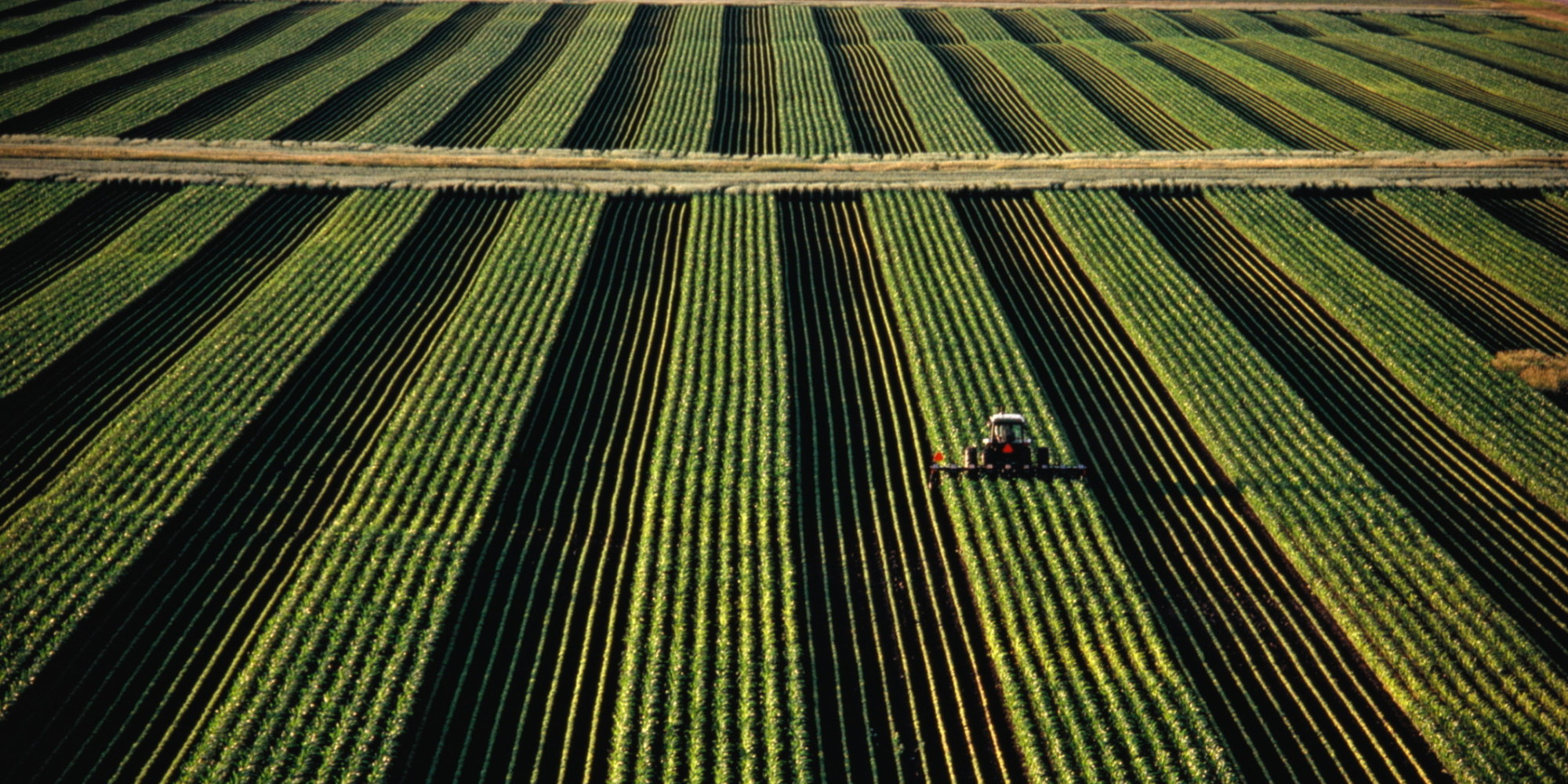 Agriculture Industry Fights For 'Right To Farm' In Midwest