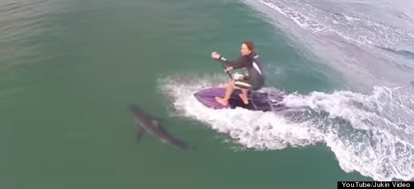 LOOK: Surfer Almost Runs Over Shark With Stand-Up Paddleboard And Has No Idea