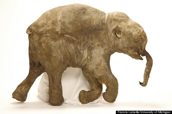 mammoth scan