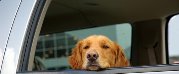 SAD DOG CAR