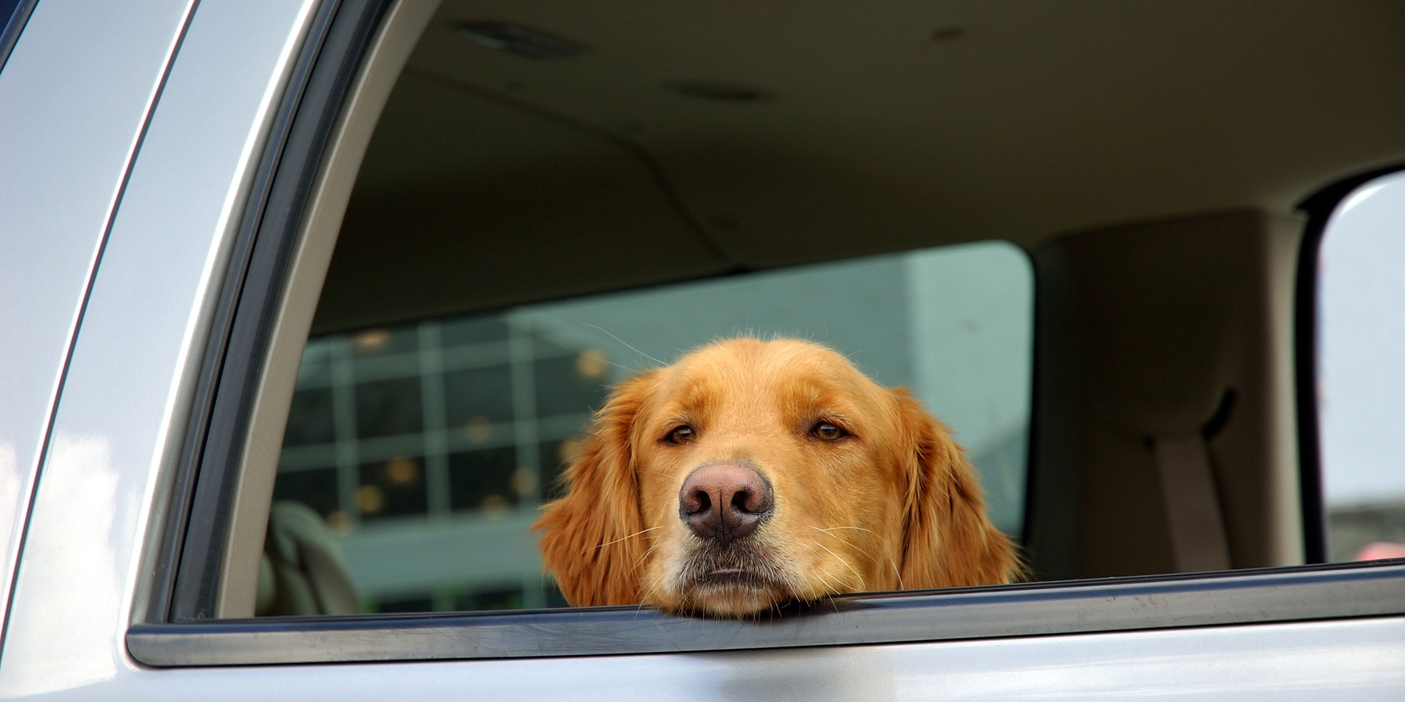 Laws On Dogs In Hot Cars