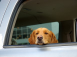 Stephen Wells:  What Our Laws Say About Dogs in Hot Cars