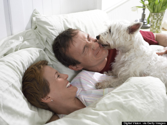 wake up dog