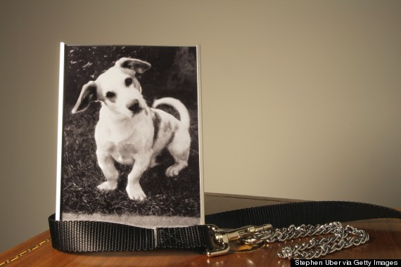 framed picture of dog