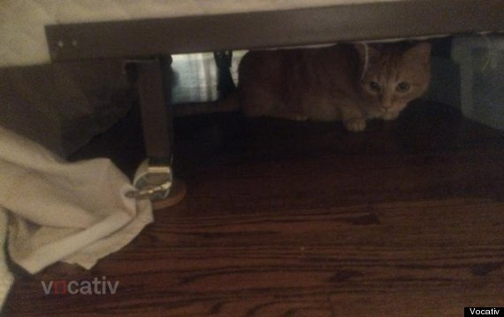 poltergeist under the bed