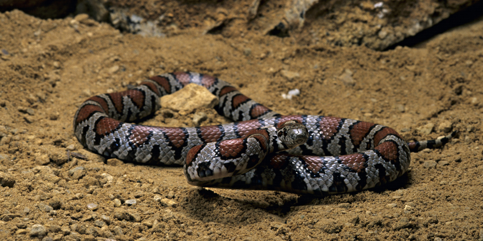 Snakes Stress And Brain Science HuffPost