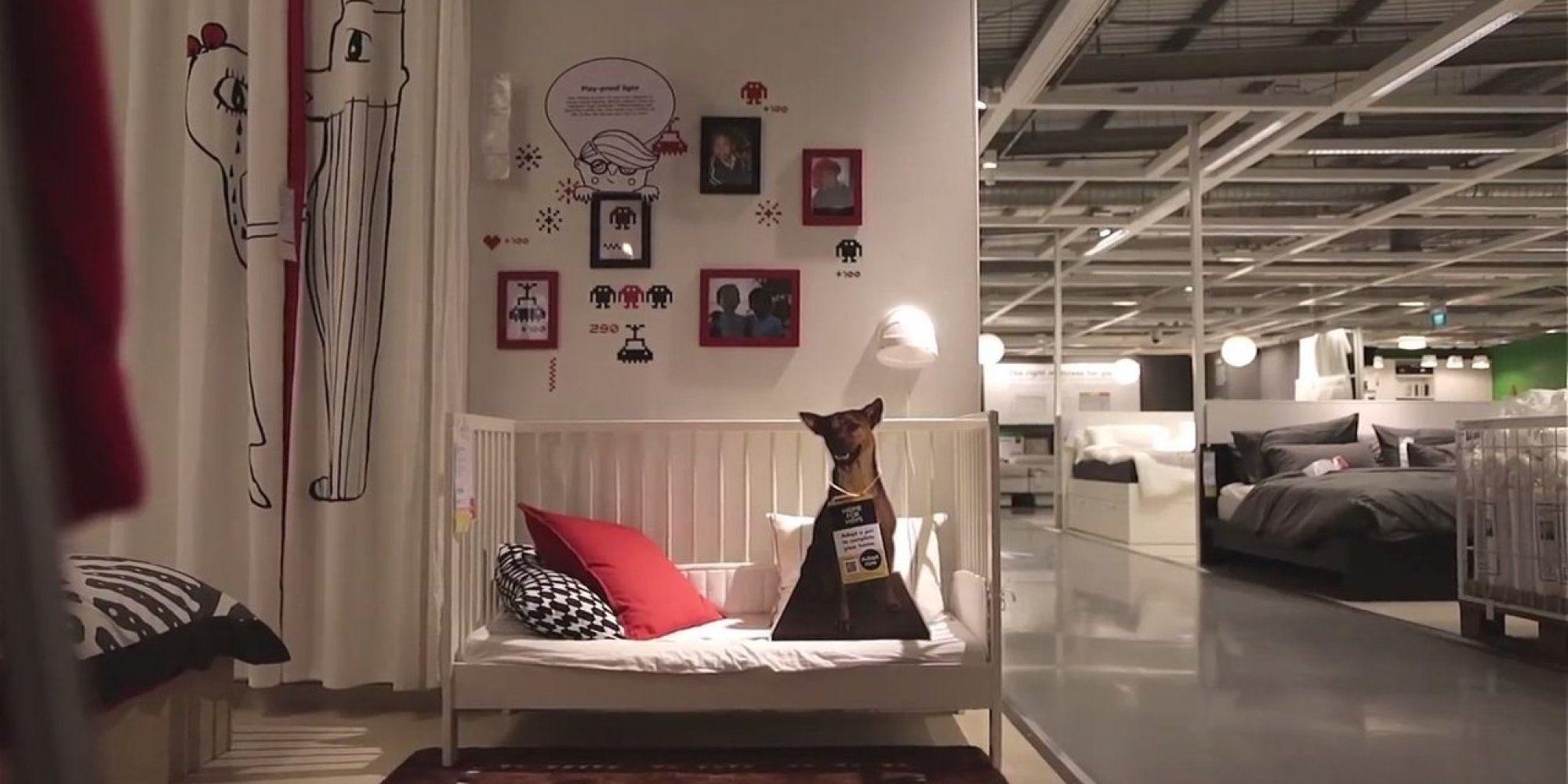 ikea advertises adoptable dogs in stores because every home needs a rescue pup huffpost. Black Bedroom Furniture Sets. Home Design Ideas