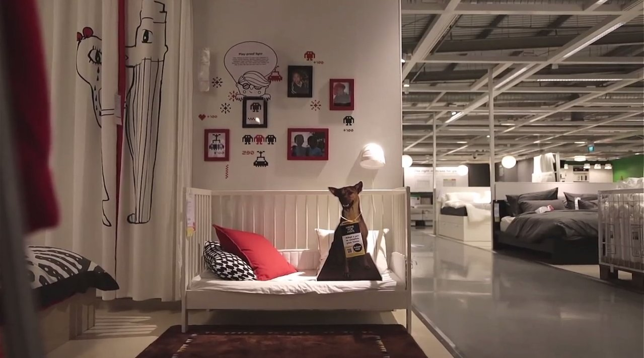 ikea advertises adoptable dogs in stores because every. Black Bedroom Furniture Sets. Home Design Ideas