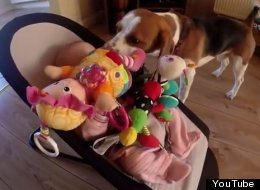 Dog Steals Baby's Toy, Then Repents By Spoiling Her Rotten