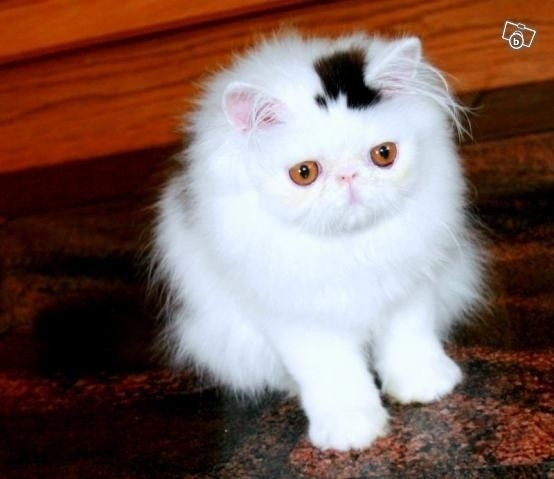 http://i.huffpost.com/gen/191974/CAT-TOP-HAT.jpg