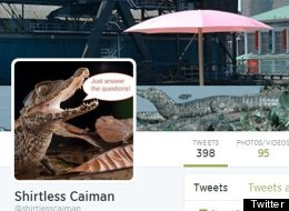 People Behind 'Shirtless Caiman,' 'Save The Penny' Twitter Accounts Speak Out