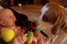 Laura and Charlie the Beagle | Pic: YouTube