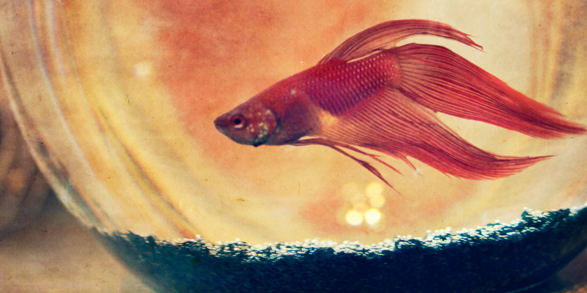 Teaching Our Son About Death One Fish At A Time Huffpost