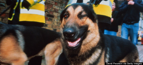 Pension Irene Collins Dies After Being Bitten By Police Dog