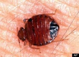 Nyc Bedbugs