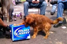Dog with case of beer | Pic: YouTube