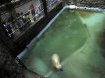 'World's Saddest Bear' Won't Be Moved, Argentine Zoo Says