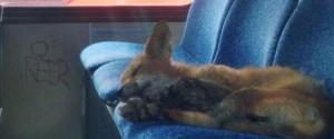 Fox Bus Ottawa