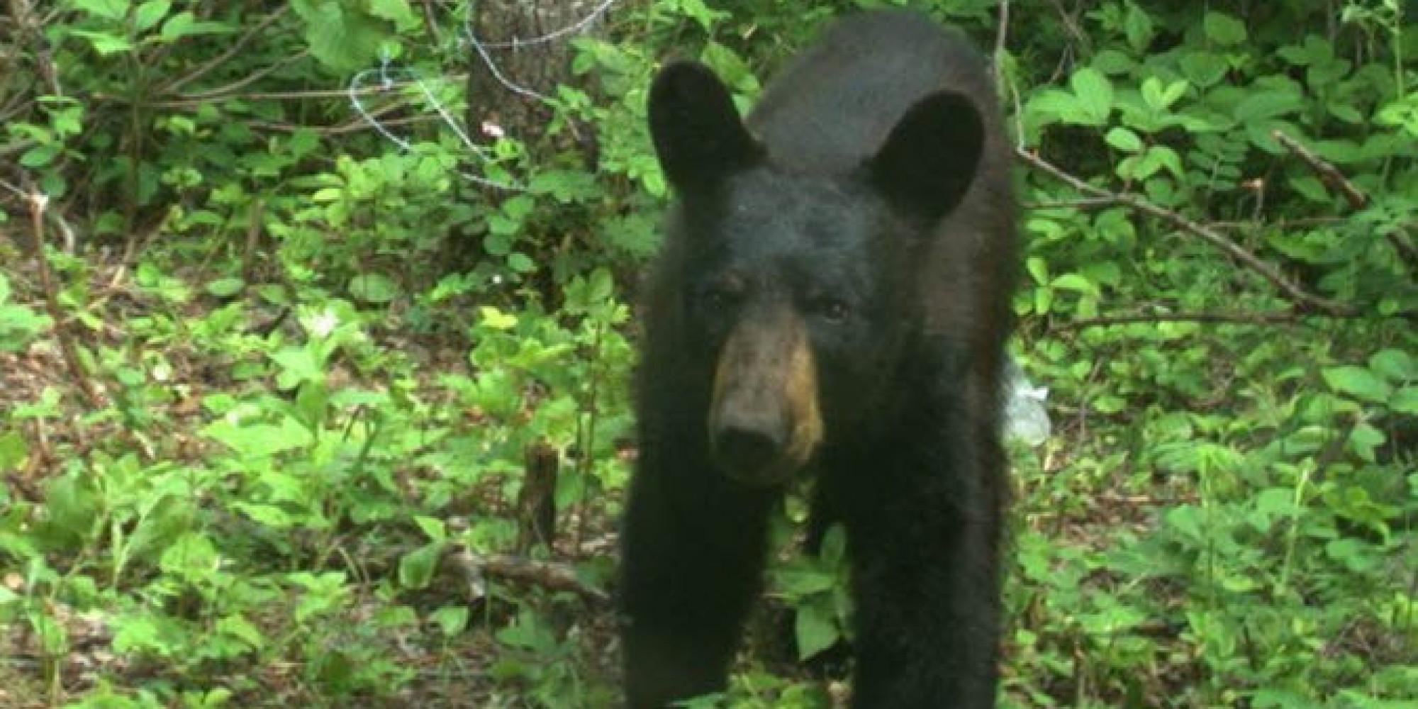 elk island national park cameras capture elusive black