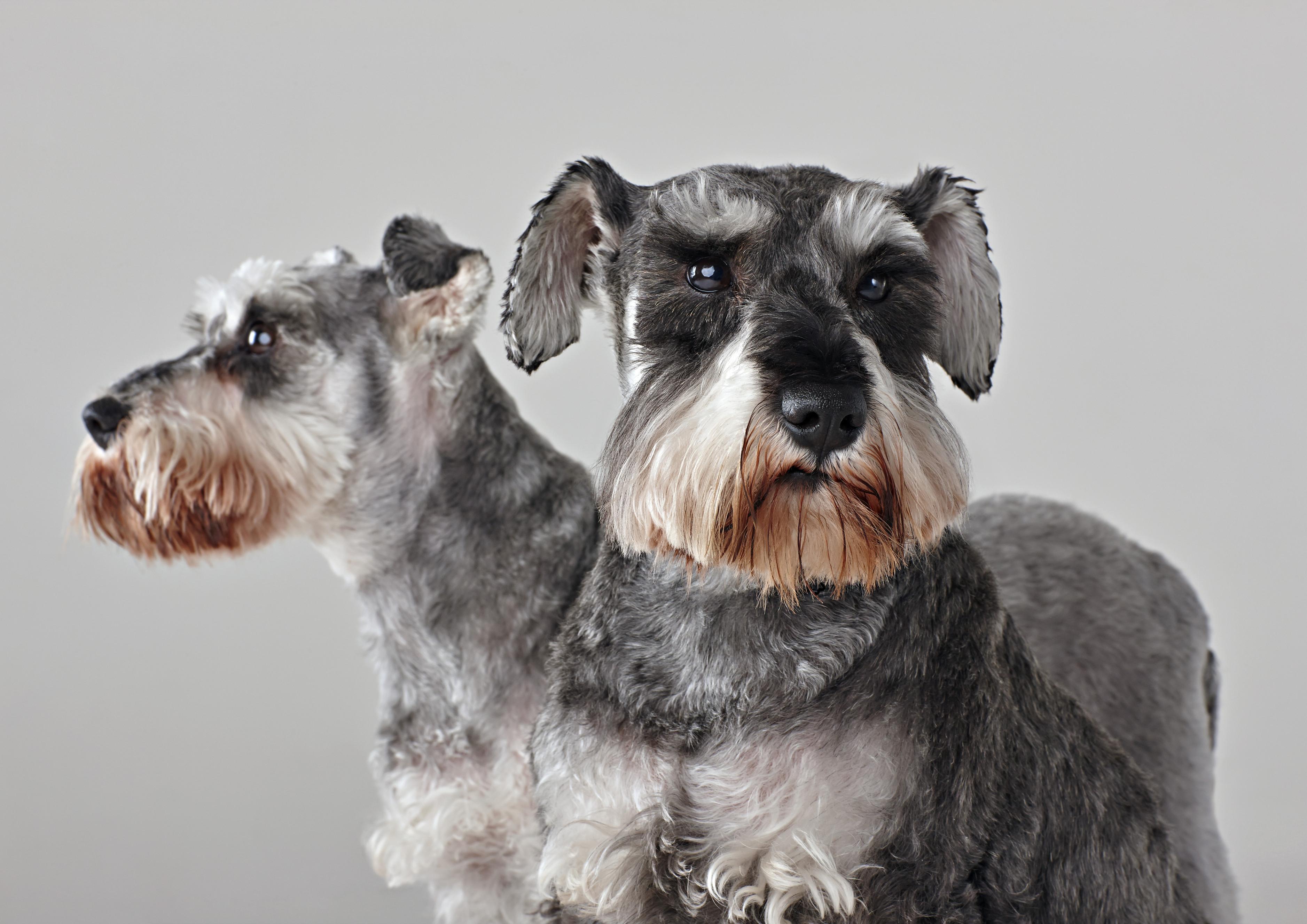 gray animals