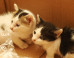Parasite In Cat Poop Could One Day Treat Cancer