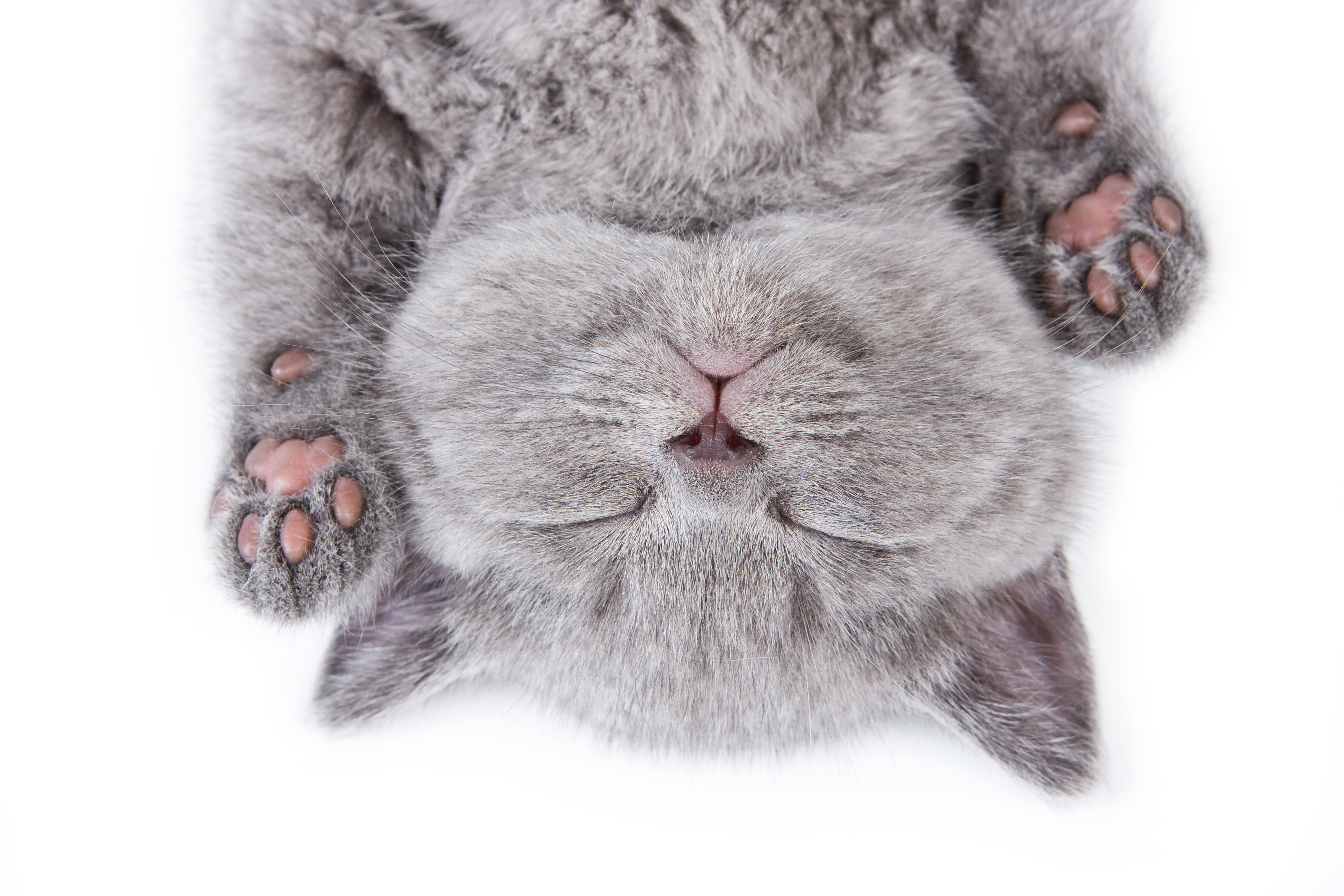 cute gray animals