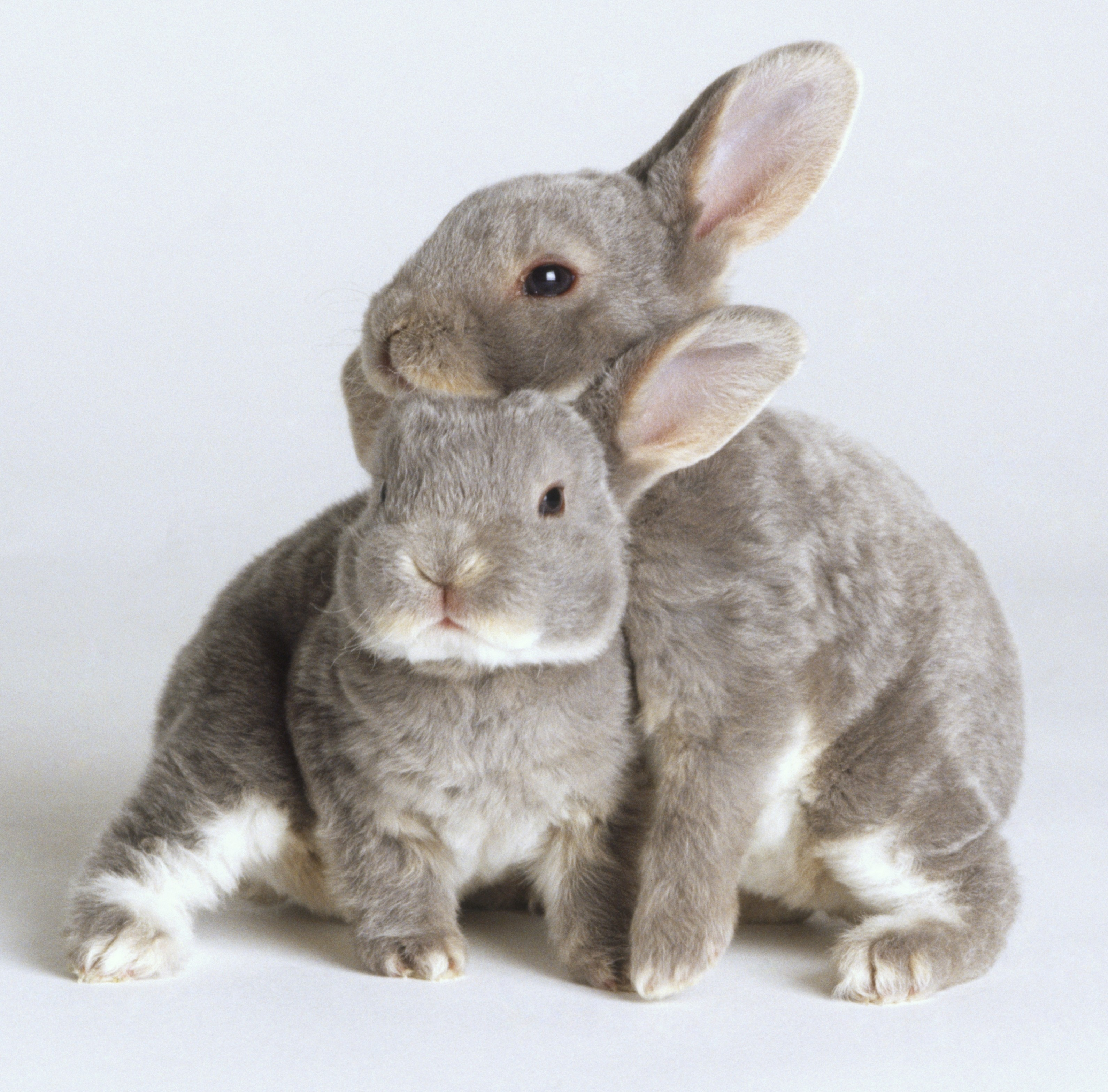 cute gray animals
