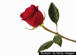 The Bachelor Recapped By Someone Who Still Wants To Know If Britt Showers