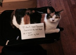 'Women Against Feminism' Get Hilarious Ally In Confused Cats