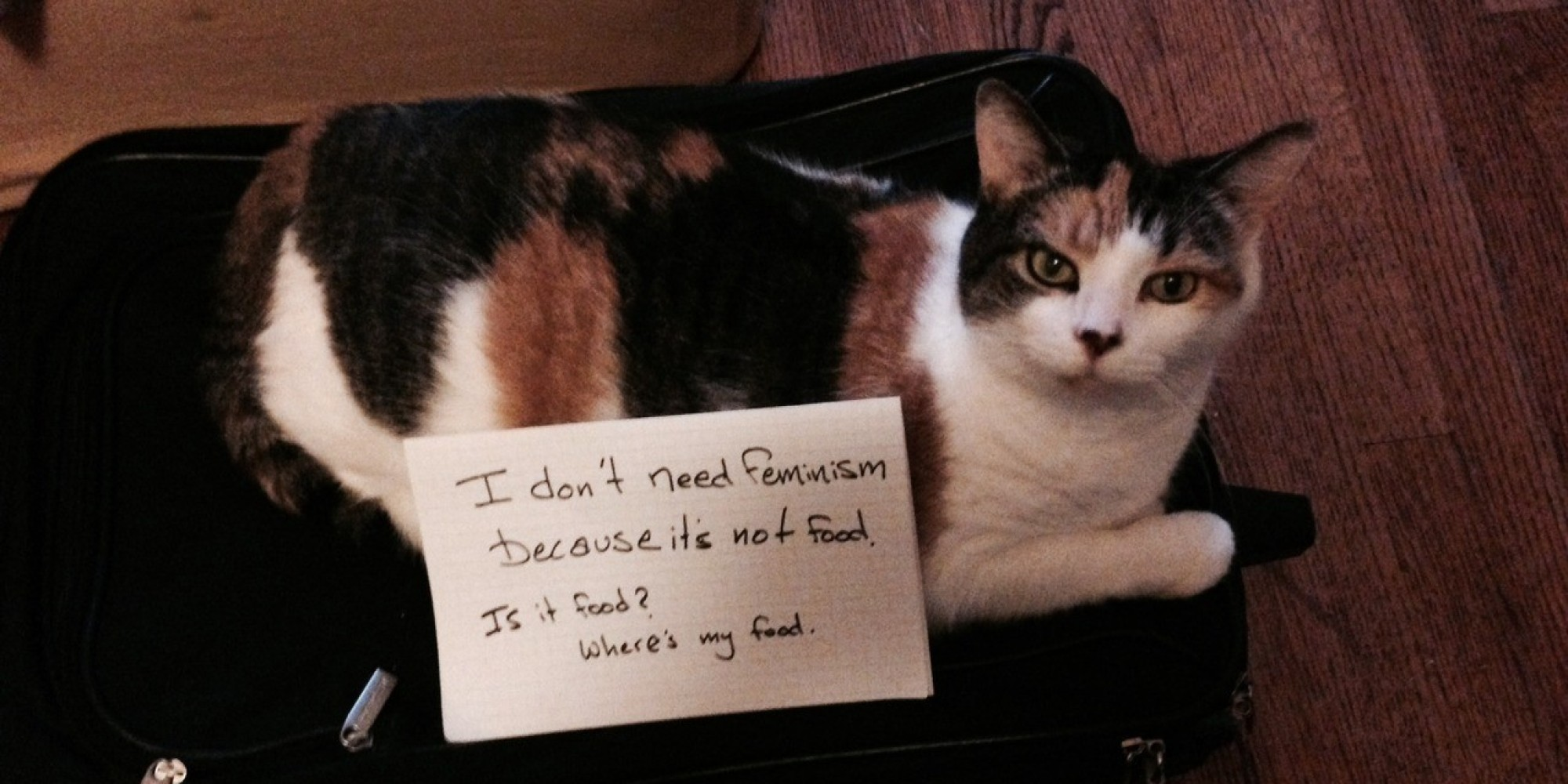 I Don T Need Feminism Because Cats