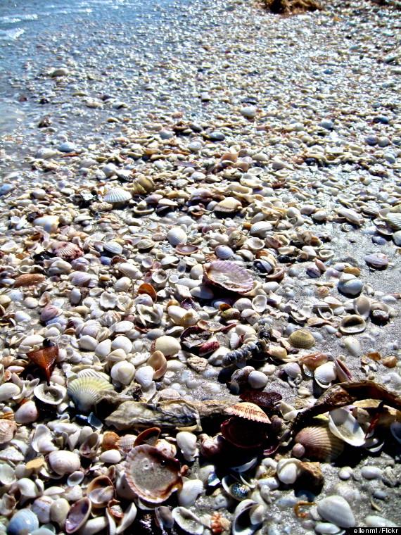 sanibel island sea shells