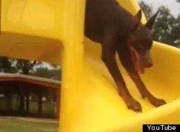 This Dog Doesn't Understand How Slides Work