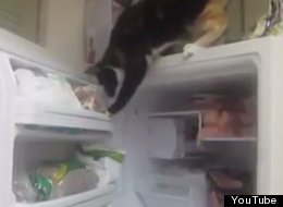 This Cat Has Learned To Steal Fish From The Freezer