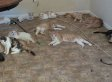 112 Cats Removed From Las Vegas Home