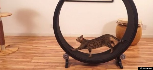 You Can Haz Hamster Wheel For Cats