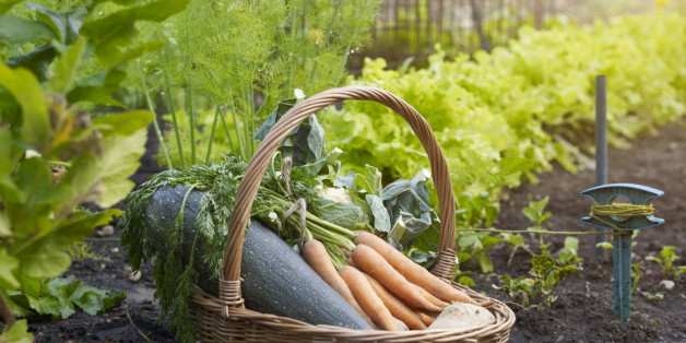 Images This Genius Cheat Sheet For Gardeners Tells Where And When To Plant Your Vegetables | HuffPost 1 growing vegetables
