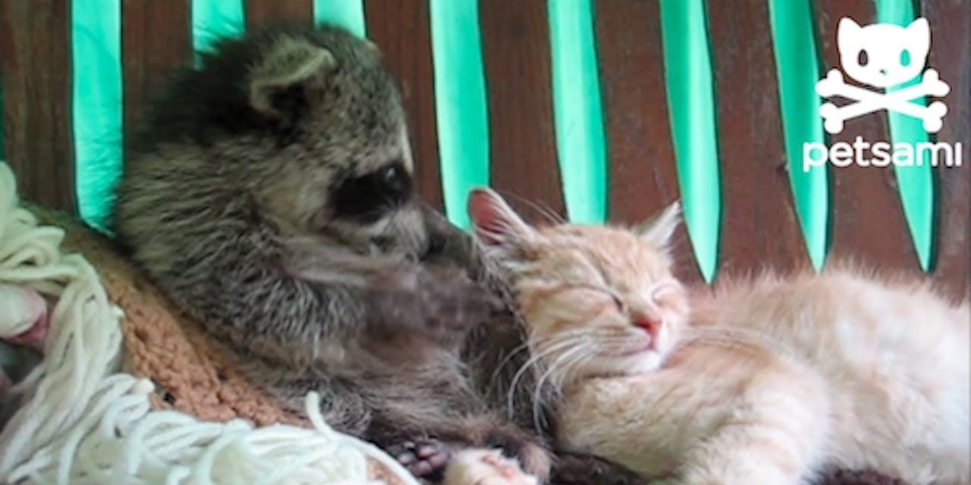 animals raccoons weasels friends - photo #39