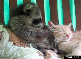 8 Unlikely Animal Friendships To Celebrate International Friendship Day