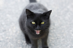 Black cat | Pic: Getty